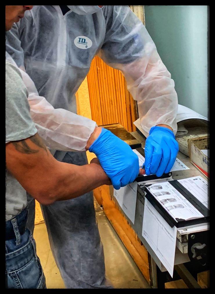 bűnügyi technikus rabosítja a gyanúsítottat, ujjlenyomatot rögzít